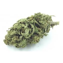 Mango kush la fleur à fumer. Envoi discret et rapide France Belgique