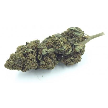 Fumer les odeurs splendides du citron, des agrumes des fleurs parfum autour de vous.